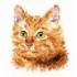 Наборы для вышивки крестом - Коты