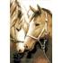 Наборы для вышивки бисером - Лошади