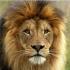 Наборы для вышивки крестом - Львы