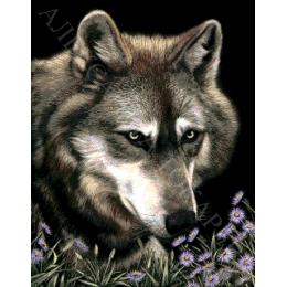 Авторский набор для вышивки бисером - Токарева А. - Волк в астрах 37-2668-НВ