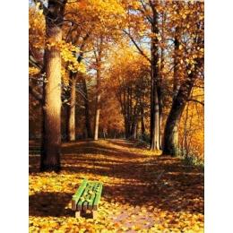 Авторский набор для вышивки бисером - Токарева А. - 45-3185-НС Скамейка в парке