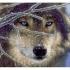 Наборы для вышивки бисером - Волки