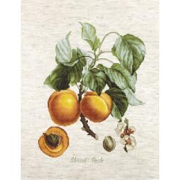 Персики (на Аиде 18) - Luca-S - набор вышивки крестом