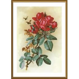 Набор для вышивки крестом - Новая Слобода - Роза красная
