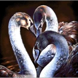 Авторский набор для вышивки бисером - Токарева А. - Чёрные лебеди 43-2116-НЧ