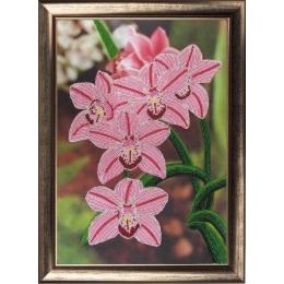 Набор для вышивки бисером - Butterfly - №208 Орхидеи