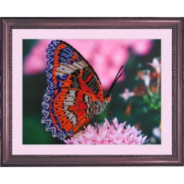 Набор для вышивки бисером - Butterfly - №102 Бабочка