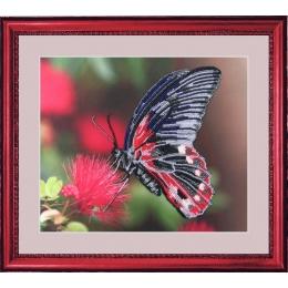 Набор для вышивки бисером - Butterfly - №103 Бабочка